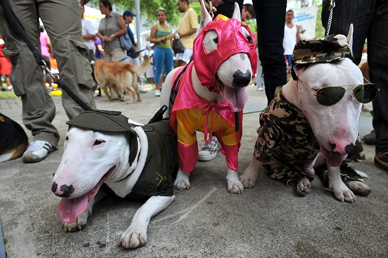 Three dogs dressed as (L to R) police officer, wrestler and soldier participate in the Family Pet festival, on October 25, 2009. (AFP Photo)