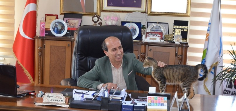 CATS CALL TOWN HALL HOME AS STAFF EMBRACES THEM