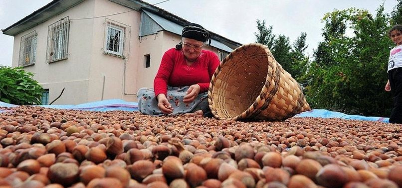 TURKEY EARNS SOME $1.1B IN HAZELNUT EXPORTS IN 7 MONTHS