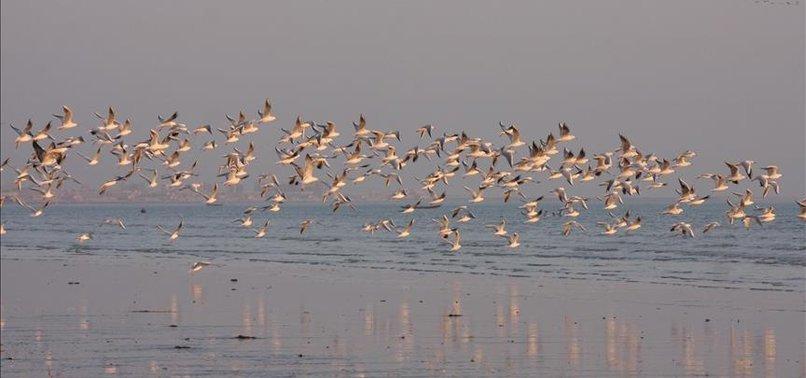 ARAB ROYALS HUNT RARE BIRDS IN PAKISTAN DESPITE OUTCRY