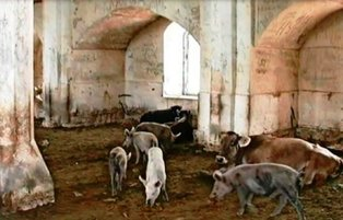 Armenians convert 'Aghdam Jamia Mosque' into pigsty in occupied Karabakh