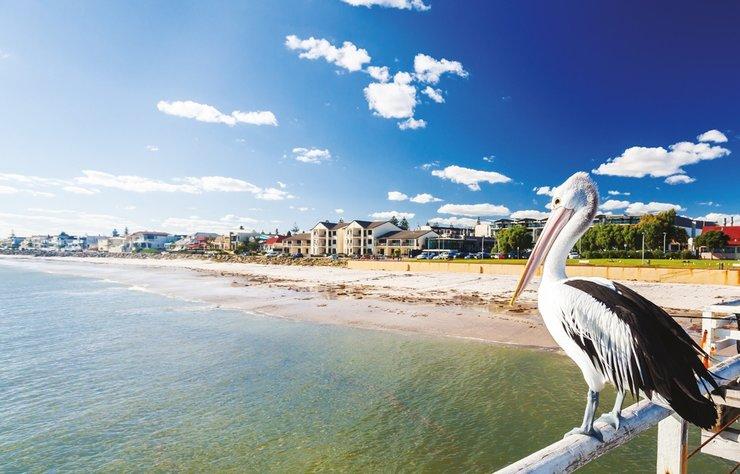 Avustralya'nın Adelaide adlı şehri; tarih, modern yaşam ve doğal güzellikleri bir arada sunmasıyla tatil için iyi bir alternatif oluşturuyor. Sakin bir şehir olan Adelaide'de, kanguru ve koalaları yakından görme şansınız da var.