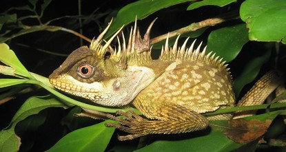 pScientists discovered 163 new species in Asia's Greater Mekong region last year, according to a report released Monday by the World Wildlife Fund (WWF)./p