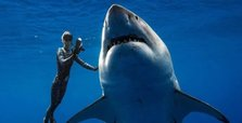 Divers swim with one of biggest great white sharks