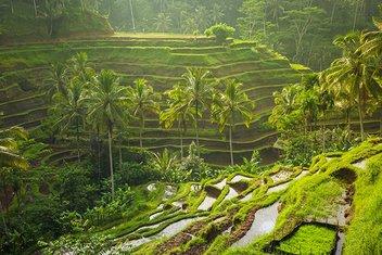 Endonezyanın büyüleyici adası: Bali