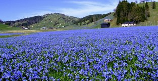Anatolia a heaven for endemic species