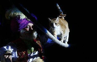 Moscow Cat Theatre invites guests