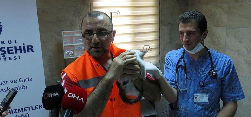 ISTANBULITE ROAD WORKER SAVES KITTEN WITH BREATH OF LIFE