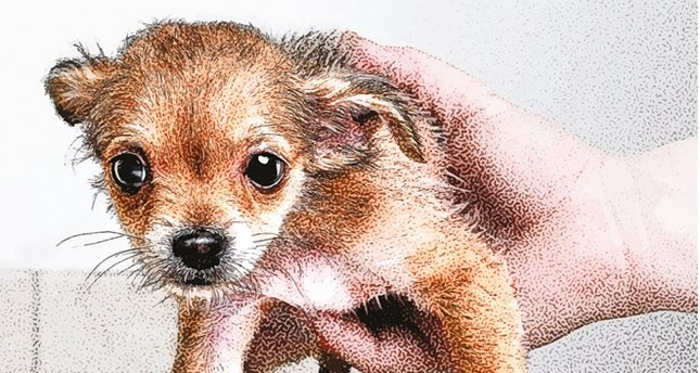 Şiddetin bir başka boyutu: Hayvan eziyeti