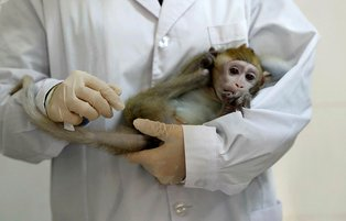 China clones gene-edited monkeys for sleep disorder research