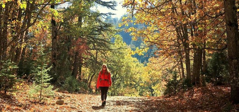 NOVEMBER 11 DECLARED AS NATIONAL FORESTATION DAY IN TURKEY