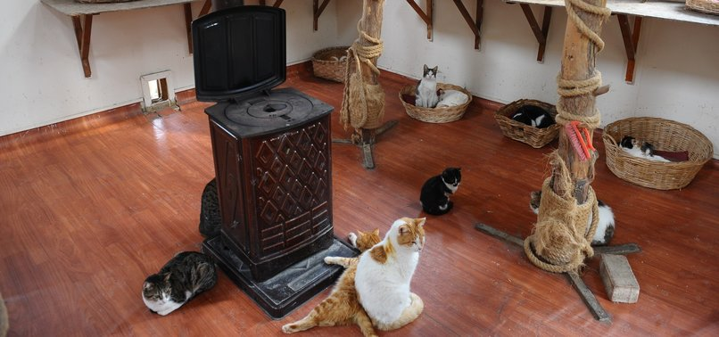 STRAY CATS OF TURKEYS BURSA LIVE UNDER ONE WELCOMING ROOF
