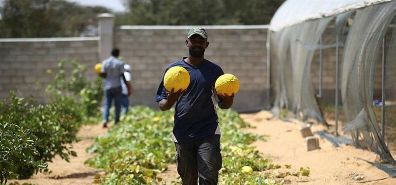 TURKISH AGENCIES BRING MODERN AGRICULTURE TO SOMALIA