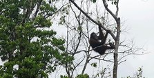 World's largest brands responsible for Indonesia forest destruction