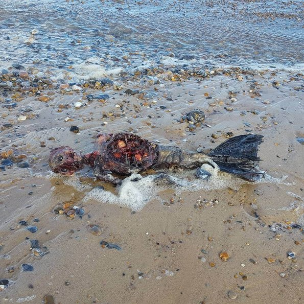 İngiltere sahilinde ölü denizkızı bulundu!