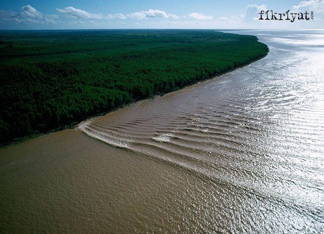 Pororoca Dalgası, Amazon Nehri