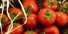 Turks, Russians eager to resume tomato exports