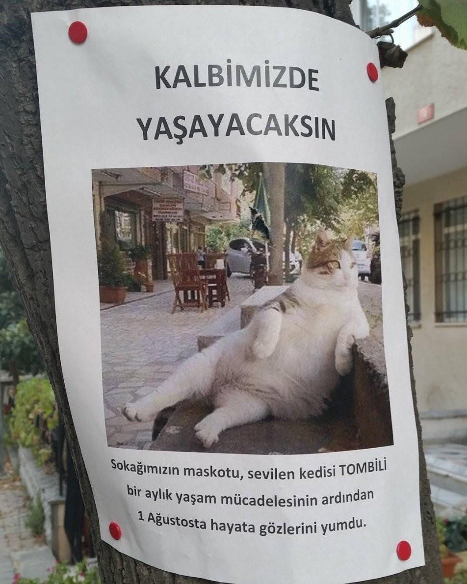 """قطة اسطنبول الشهيرة تومبيلي"""" تفارق الحياة"""