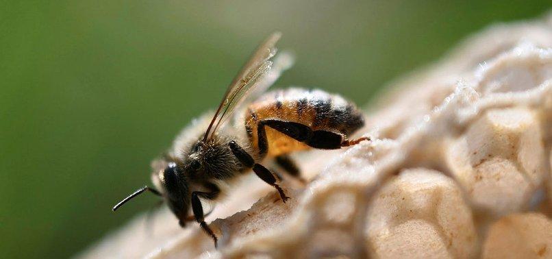 ENVIRONMENTAL NGO PRAISES EUROPES MOVE TO PROTECT BEES