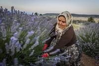 Kuyucak Village: The land of lavender in Turkey