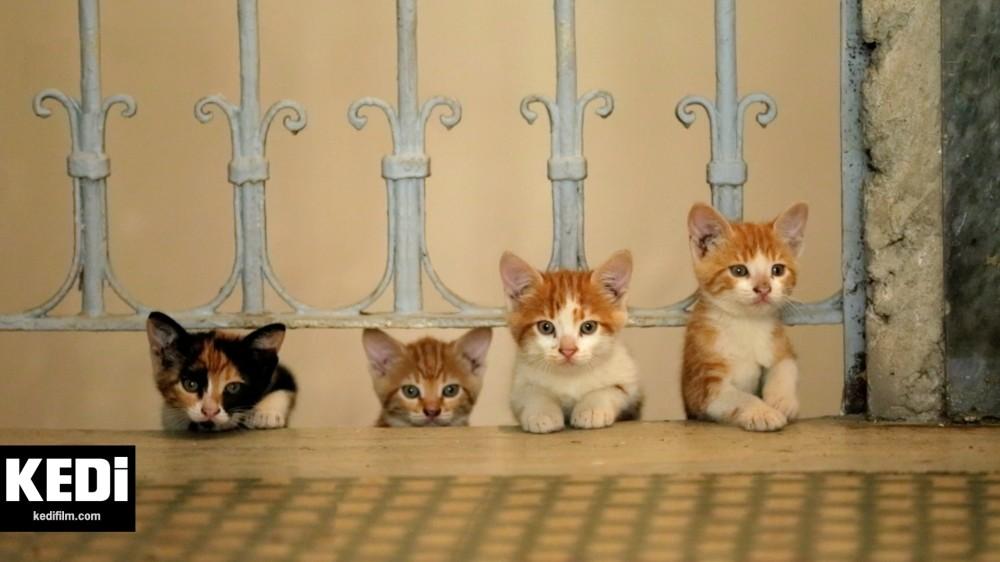 A scene from Ceyda Torunu2019s film u201cKEDi,u201d (Cat) a film about the felines living in Istanbul.