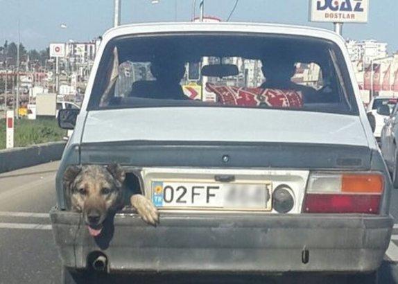 Adıyaman'da, stop lambası yerine köpek kafası