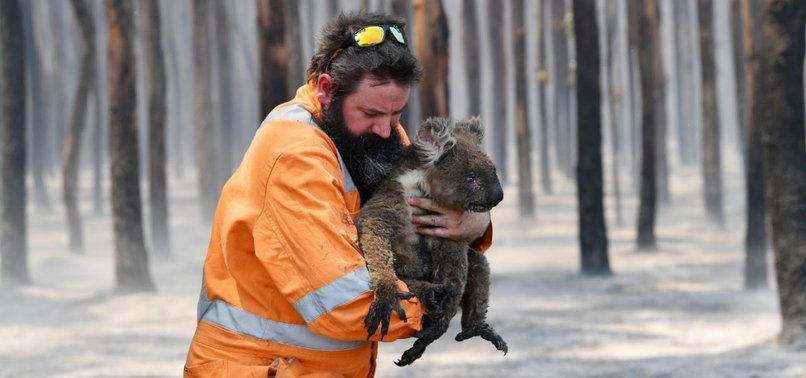 VOLUNTEERS KNIT MITTENS, POUCHES FOR KOALAS AND JOEYS BURNT BY AUSTRALIAN BUSHFIRES