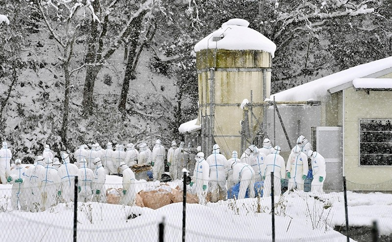 Officials in protective gears cull chickens in the snow at a poultry farm after a highly virulent strain of bird flu was detected in Yamagata in Gifu Prefecture, central Japan. Jan. 15, 2017. (Reuters Photo)