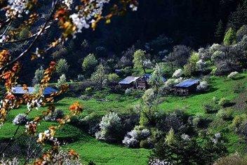 Zigana Dağının eteklerindeki renk cümbüşü