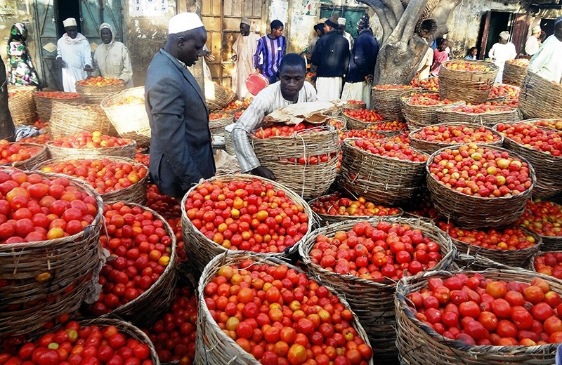 This file photo taken on January 15, 2016 shows a trader sorting baskets of tomatoes at the Yankaba vegetables market in northern Nigerian city of Kano, on January 15, 2016. (AFP Photo)