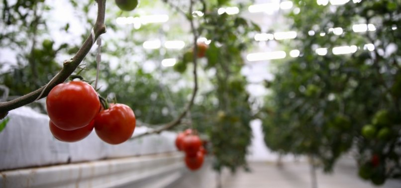 Russia to double tomato imports from Turkey, Agriculture Minister
