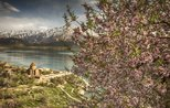 Welcoming spring with colorful blossoms on Akdamar Island