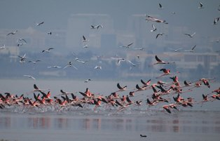 Bird watchers gather in biodiversity-rich Gediz Delta to join midwinter waterfowl count