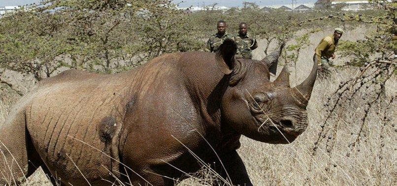 8 ENDANGERED RHINOS DIE IN KENYA RELOCATION BID