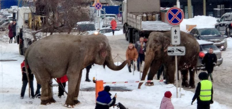 ELEPHANTS PLAY IN SNOW AFTER ESCAPING CIRCUS IN RUSSIA