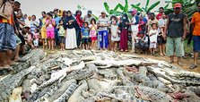 Indonesian mob slaughters 'hundreds' of crocs in revenge attack