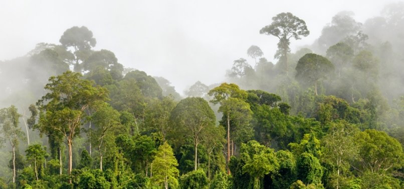 SCIENTISTS DISCOVER WORLD'S TALLEST TROPICAL TREE IN MALAYSIA