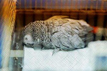 Hayvanlara karşı merhametin hadislerdeki yeri