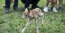 Abandoned fawn finds new mother in goat at Istanbul zoo