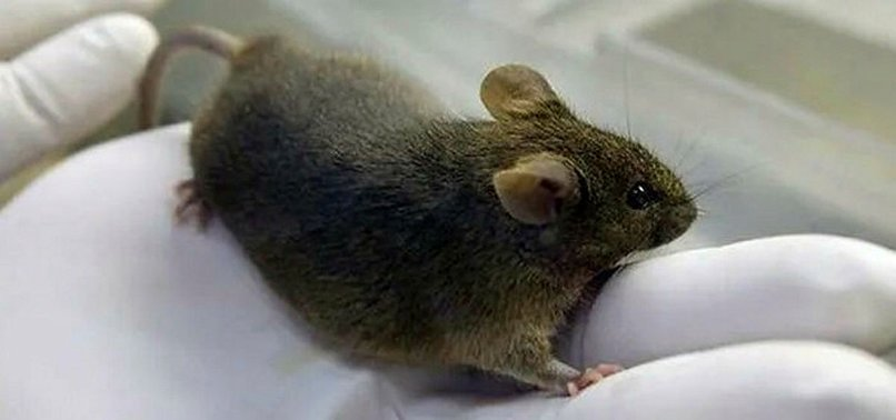MICE CAN REPRODUCE AFTER STINTS IN SPACE: STUDY