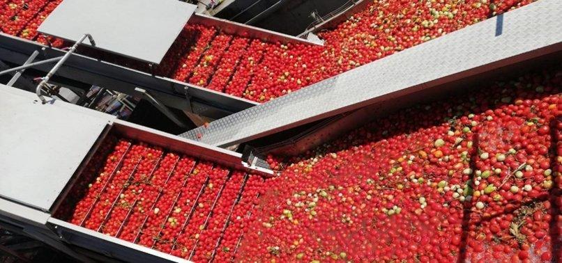 TURKEY EXPORTS TOMATO PASTE TO 99 COUNTRIES
