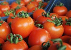 Rusya'dan Türk domates açıklaması
