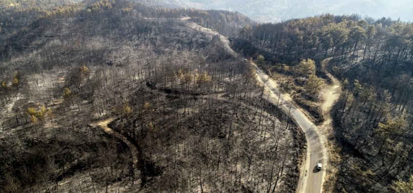 74 forest fires across Turkey under control: Official