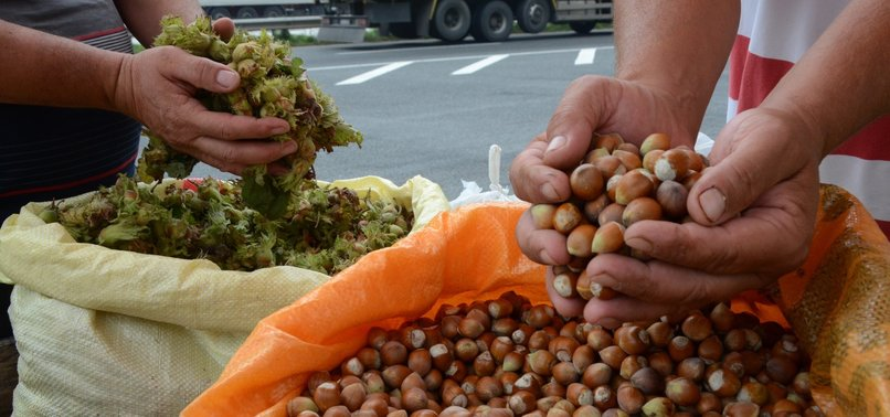 Turkey exports 262,000 tons hazelnut in 11 months - anews