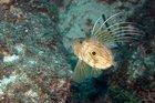 Ölümünü balığın gözlerinde gören adamın hikayesi :  Dülger Balığının Ölümü