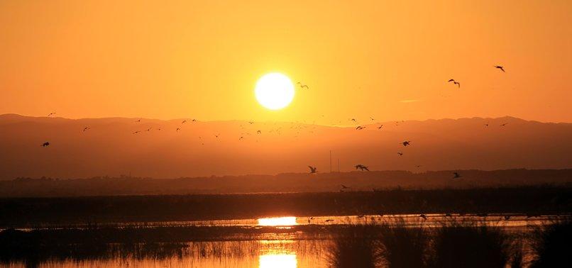KIZILIRMAK DELTA: A HEAVEN FOR BIRD WATCHERS