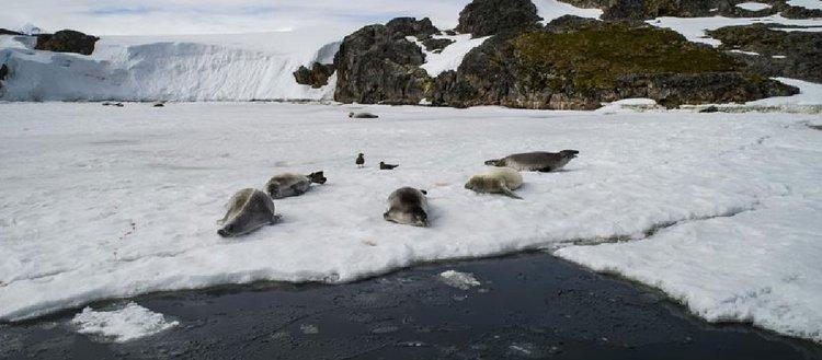 Bilim ve barış kıtası Antarktika'da 'araştırma' yarışı