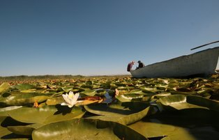 Lake Beyşehir's picturesque water lilies attract nature-lovers