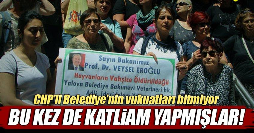 CHP'li belediyeye barınakta katliam cezası