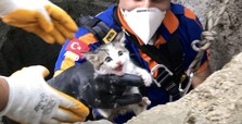 Kittens saved by rescue teams, ready for new lives